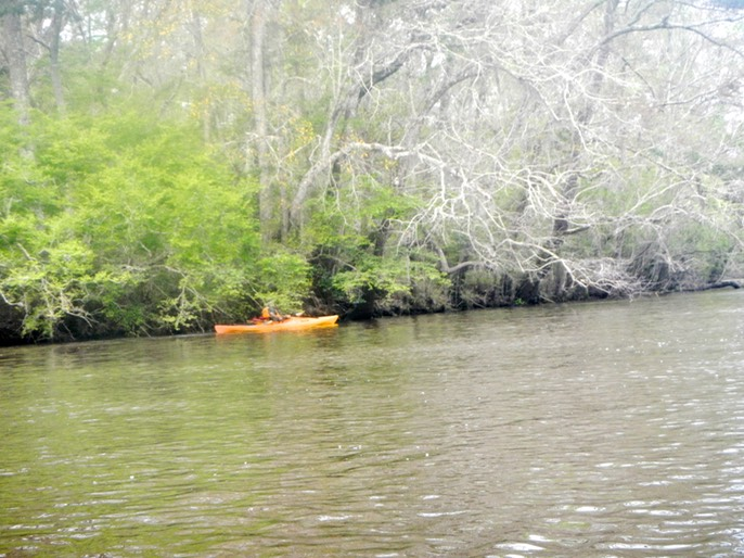 Ochlockonee River 3/20/13 - 11