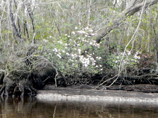 Ochlockonee River 3/21/13 - 13