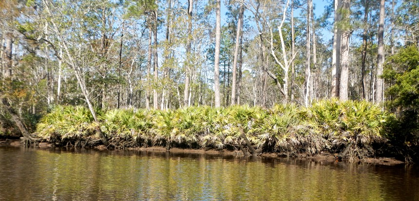 Ochlockonee River 3/21/13 - 16