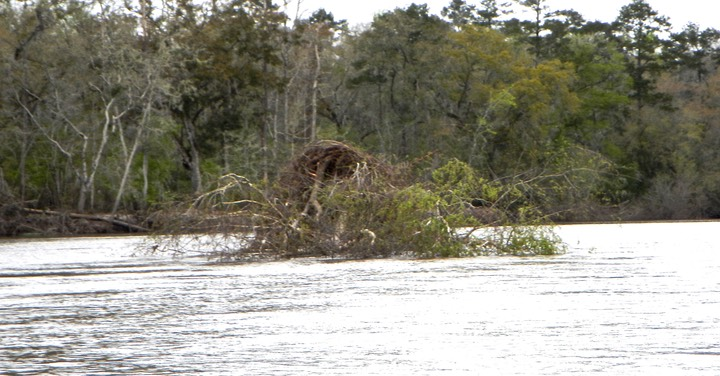 Ochlockonee River 3/17/13 - 16